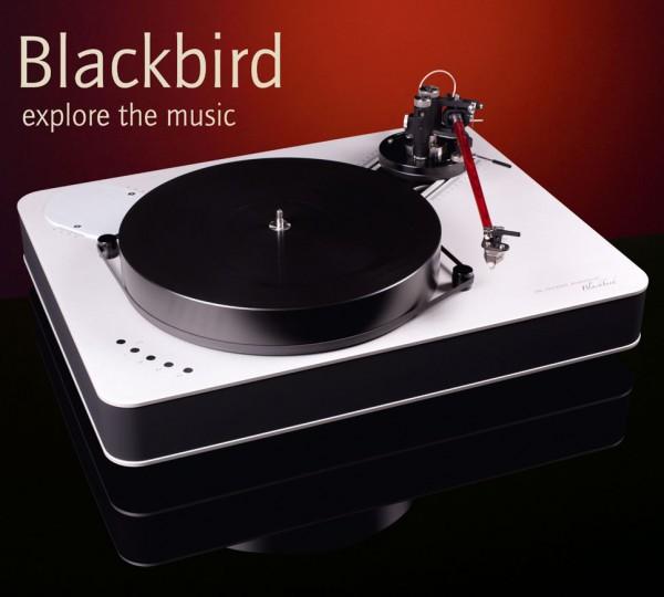 Dr. Feickert | Blackbird